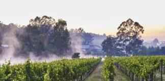 Millbrook Winery Vineyard
