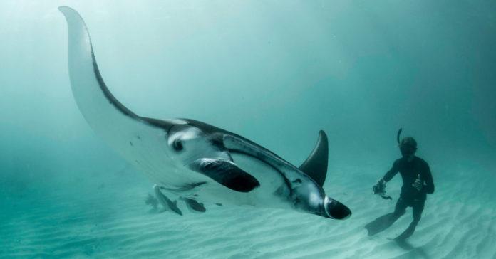 Splash Of A Lifetime: Swim With Australia's Big Three, Only In Ningaloo
