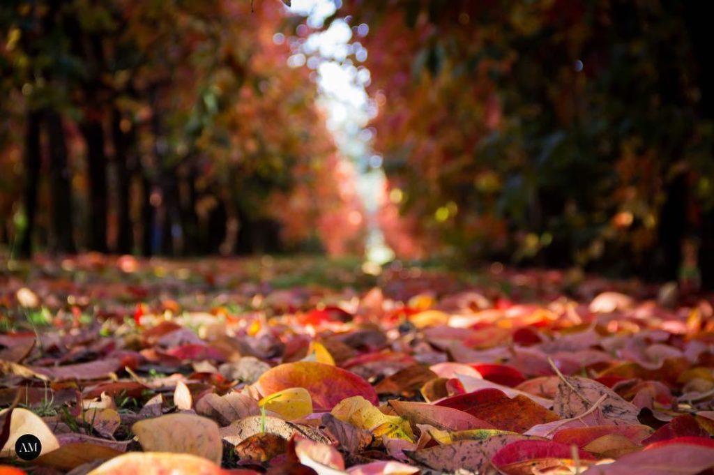 Raeburn Orchards Perth's Beautiful Autumn Paradise