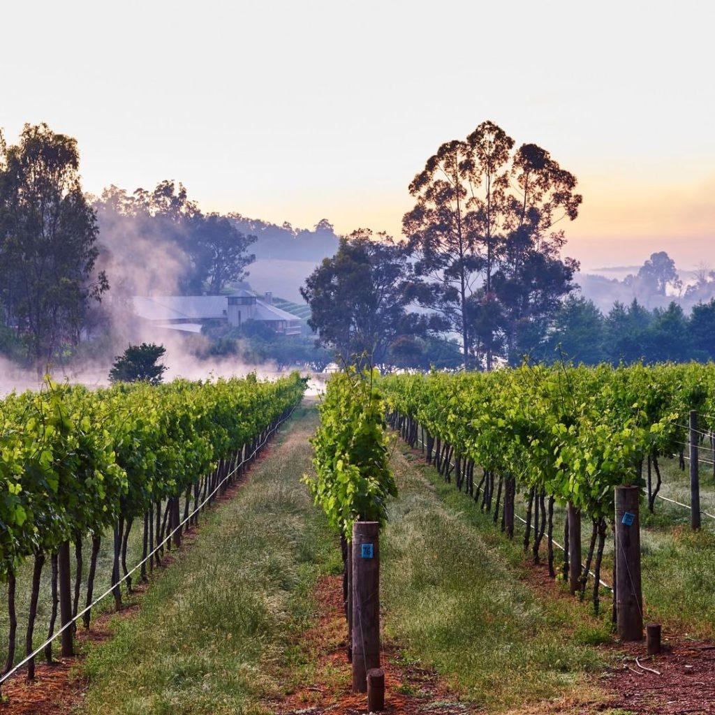 Perth Hills wineries