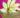 Toots - Hidden Dancefloor Perth - Appletini