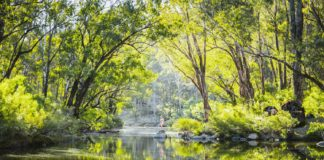 Best Things To Do In Dwellingup