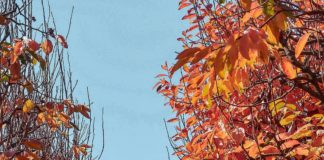raeburn orchards- instagram locations
