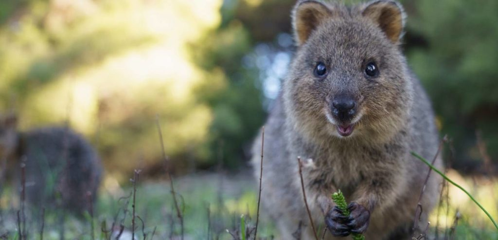 Quokka Birthday Party: Your Invitation To The World's Happiest Birthday Party On Rottnest Island